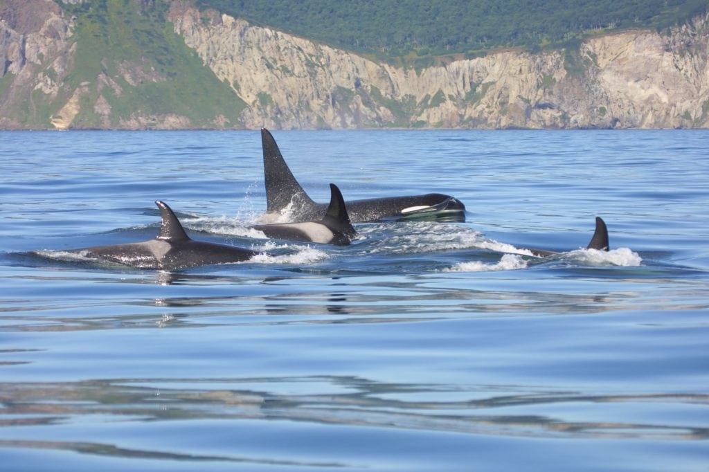 Do whales and dolphins have families?