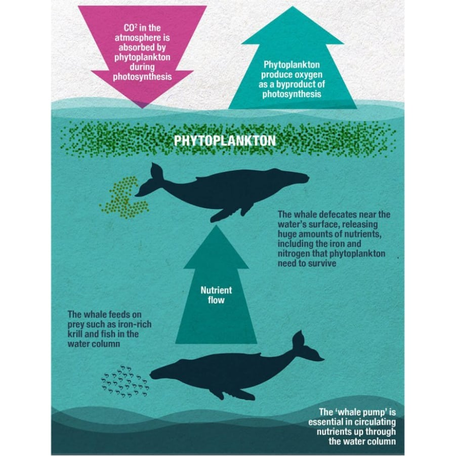 Eco-whale infographic