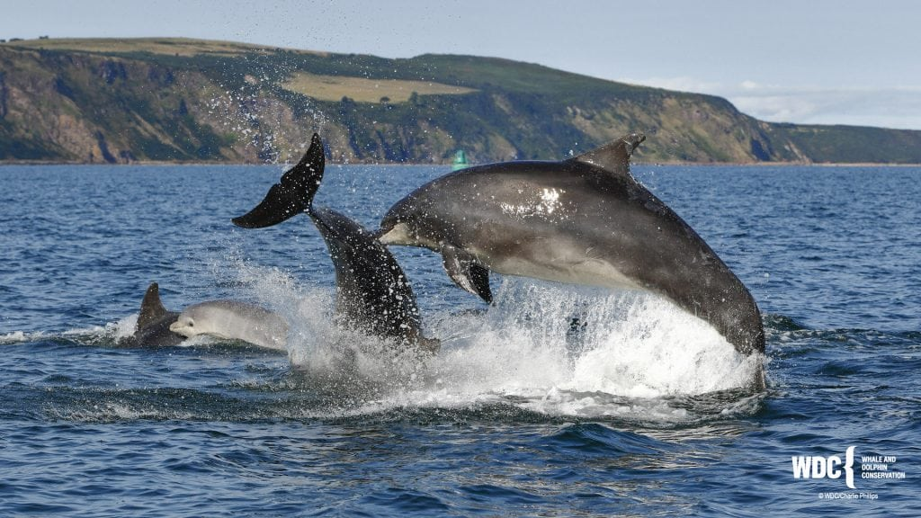 How intelligent are dolphins?